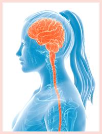 脳とホルモン